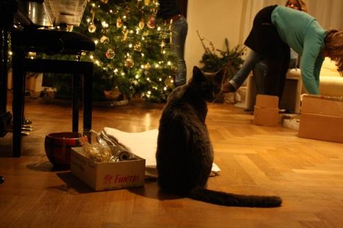 onlooker: the cat